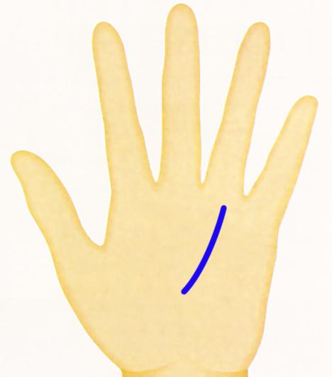 Kéz - napvonal