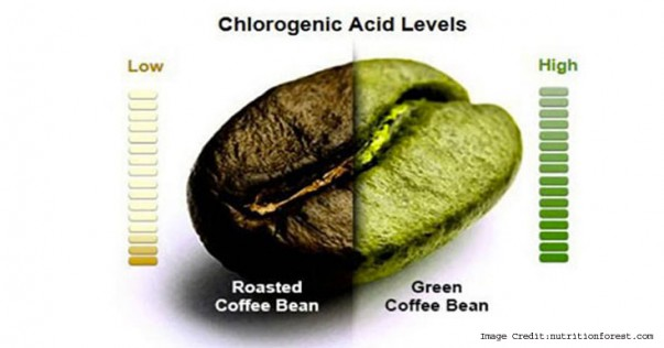chlorogenic-acid-definition