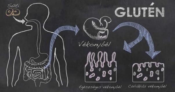 gluten-glutamin-6m6k3drucocf7wxksfshxk1ux9c6yrxlowxhs9ebnb4