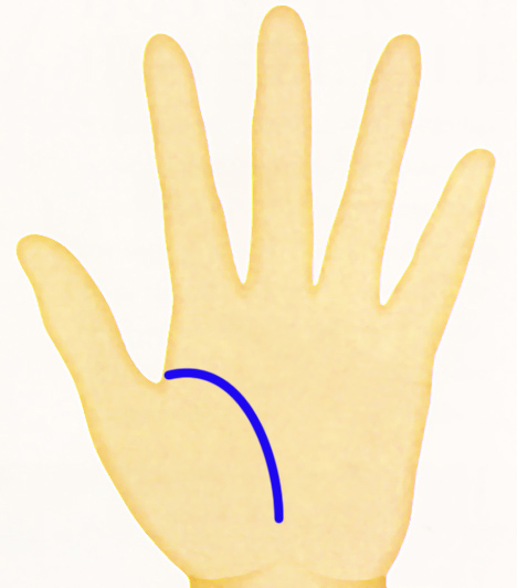 kéz - eletvonal