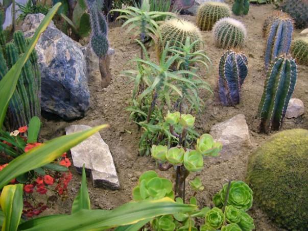 kaktuszkert2