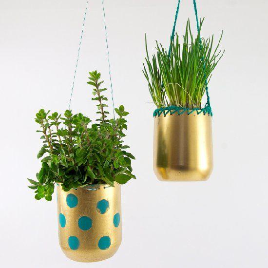 növény4